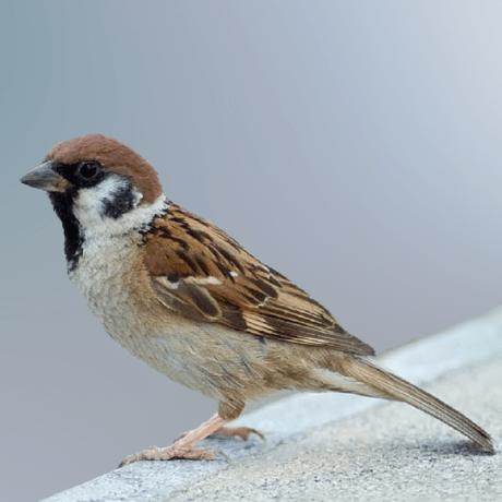 GitHub  Sparrowlangsparrow The Sparrow programming