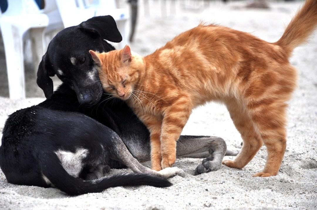 Stop à l'errance animale
