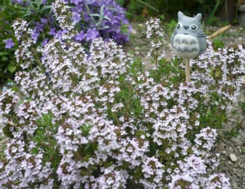 totoro-dans-les-plantes.jpg