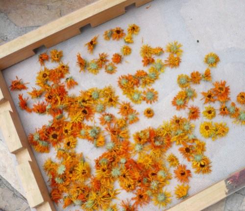 calendula-macerat-fleurs-sechees.jpg