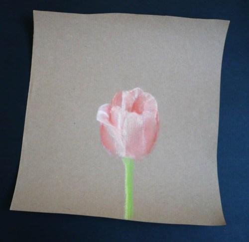 tulipe-pastel-sec.jpg