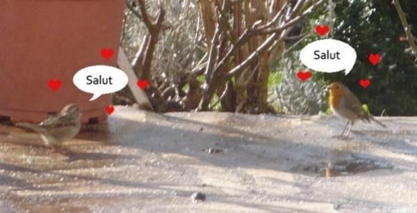 pic-bird-2.jpg