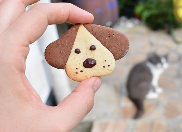 biscuit chien diy