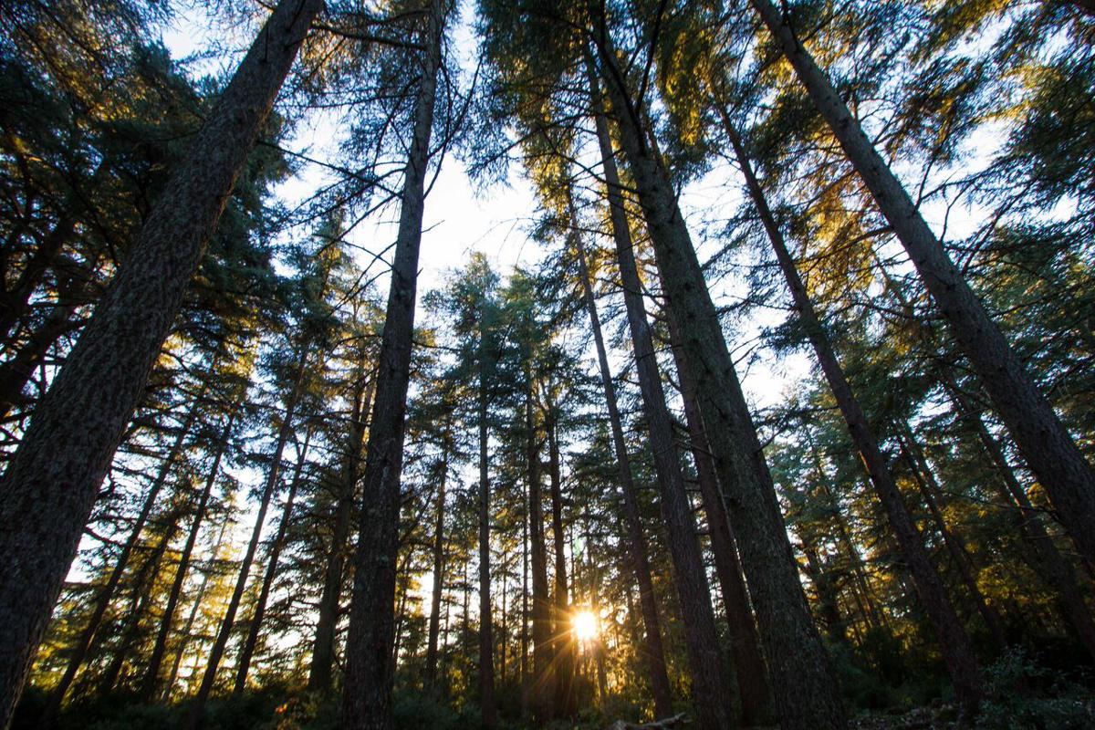 40 février La Forêt de Cèdres de Bonnieux – L'écologie citoyenne ...