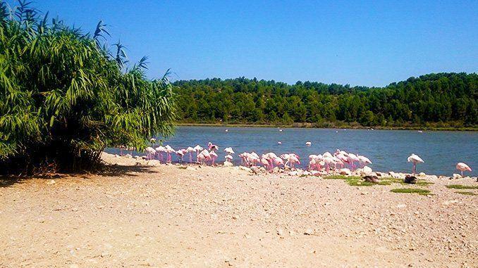 El gran lago de la reserva