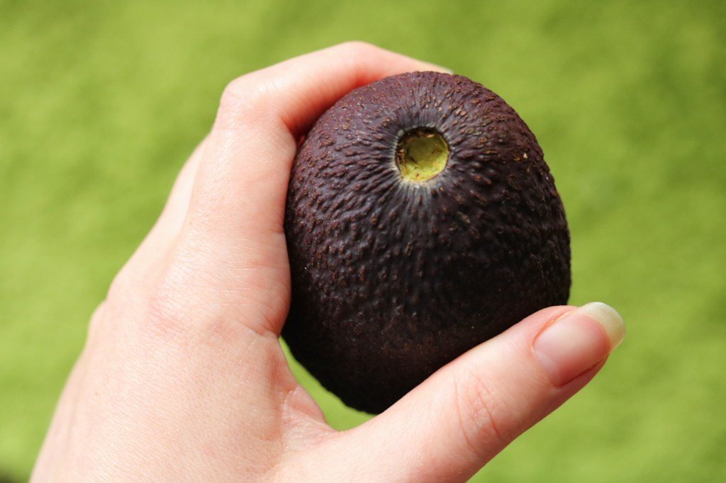 ripe avocado how to tell stem
