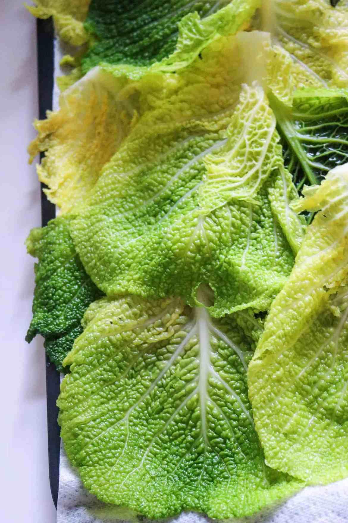 foglie di cavolo verza sbollentate