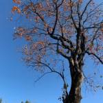【11月】【ショップイベント】【TREK】【コンセプトストア】【Bicicorsa AVEL】
