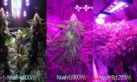 How to use led grow light for your marijuana   Best LED ...