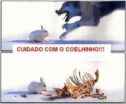 coelhinho