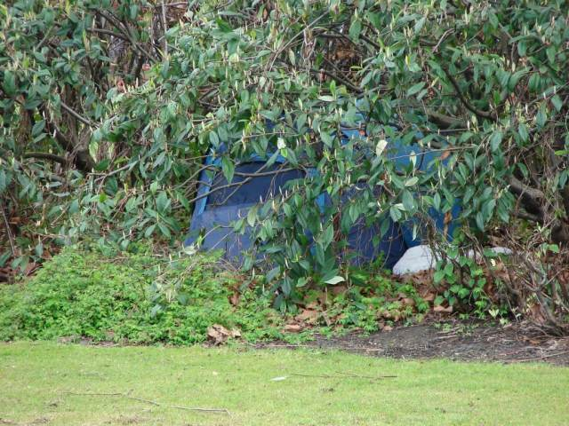 tent under ring road bushes 1