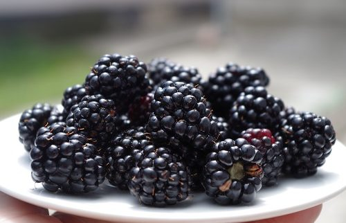 blackberries-1045728_500