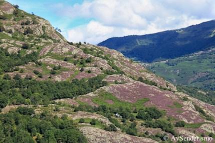 Bosc Carlac-3-2