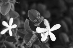 le 50mm est vraiment bon pour les fleurs, rien a dire