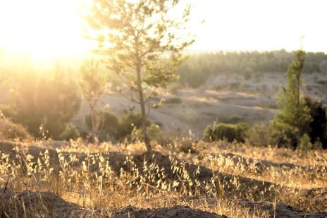 Dans quelques minutes fini la golden hour, place a la chaleur