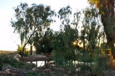 un marecage au milieu du desert
