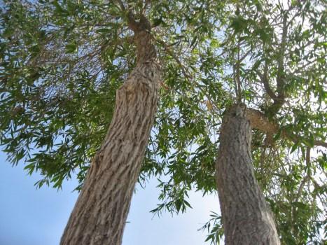 un arbre par en dessous