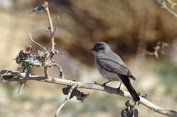 De nombreuses especes d'oiseaux profitent eux aussi de l'endroit...