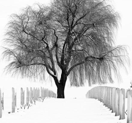 Photographier la neige