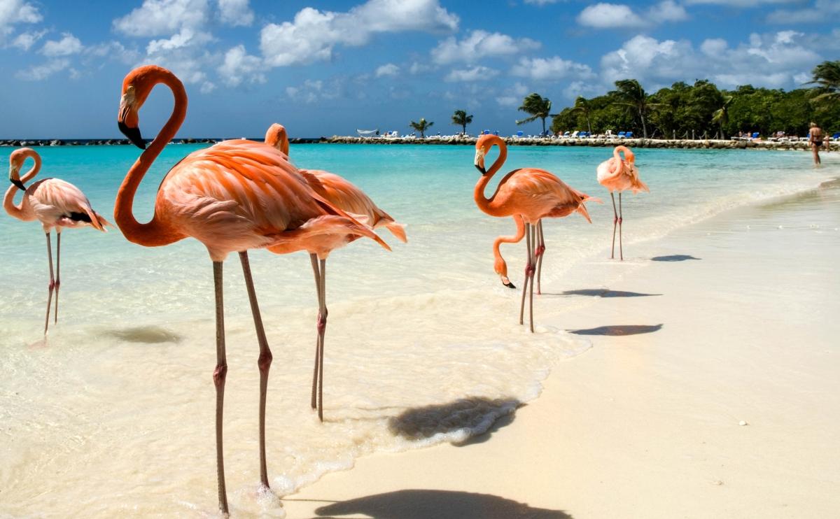 flamingo-beach2