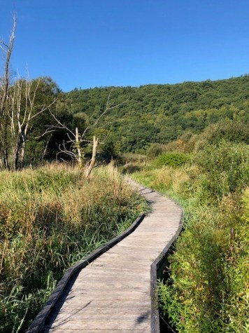 Marsh Boardwalk Near Pawling, NY