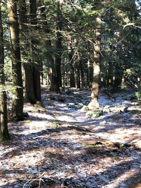 Paradise Lane Trail