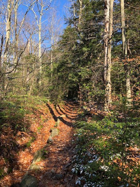 Climb after Laurel Ridge Campsite