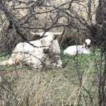 AZT Day 2 - Trail Journal| Average Hiker