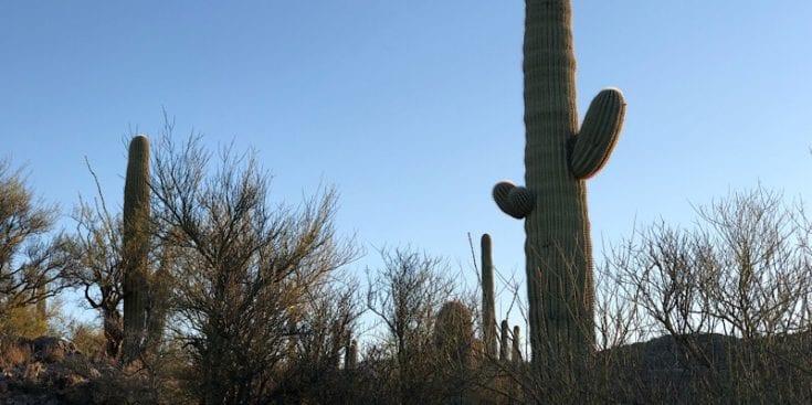 Saguaro National Park on the AZT