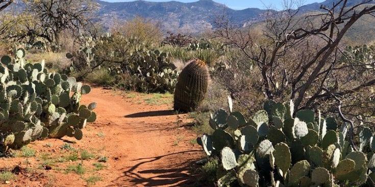 AZT Desert Garden