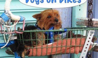 What's the Best Way to Carry a Puppy on a Bike? We Need a Good Pet Bike Basket!