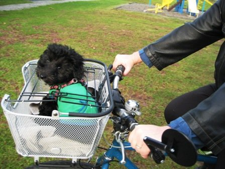 How to Gently Train Your Dog to Go On Bike Rides With You. If it's chilly, make sure your dog is warm and cozy in a jacket!