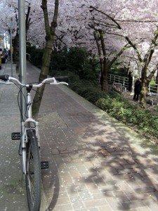 Bikes and blossoms 1 average joe cyclist
