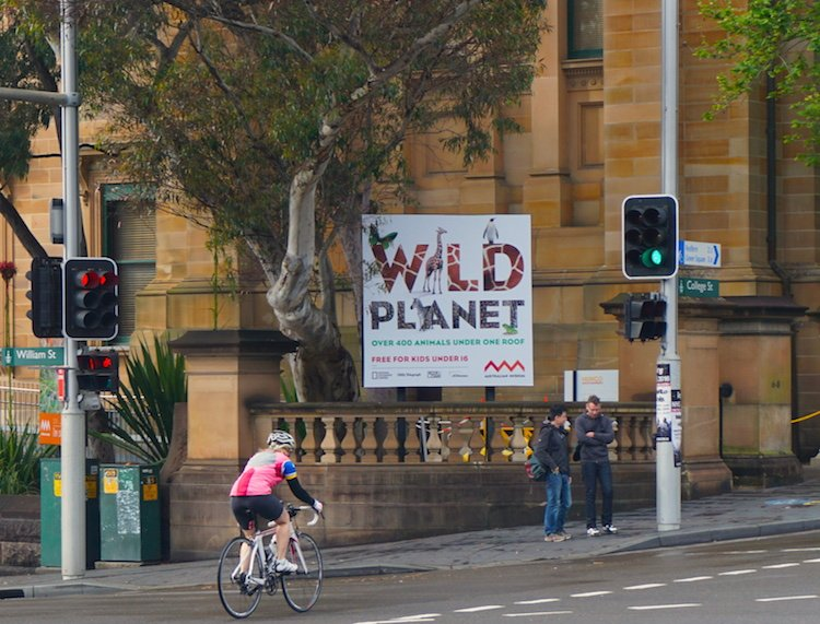 I saw a few brave cyclists on College Street, but they were few and far between. Sydney cycling