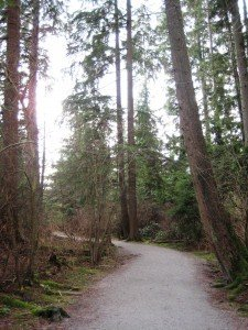 Beautiful tree-lined tracks in the heart of Deer Lake Park. Deer Lake Park Bike Trails in Burnaby, BC, Canada