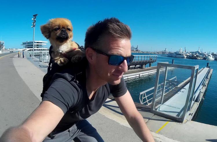 Lola the dog loves to ride in her owner's backpack! Don't try this with an untrained dog ...
