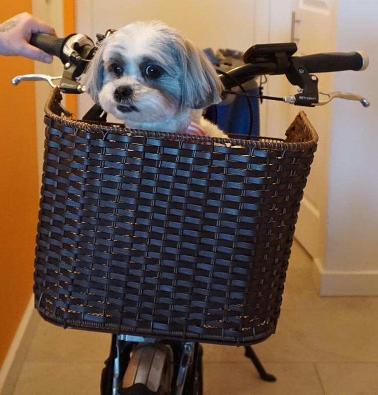 Ripley did not love the wicker pet basket. Complete Guide to Taking Your Dog on Bike Rides in a Bike Basket