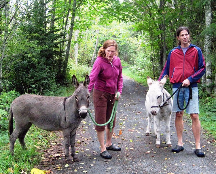 Miniature donkeys, Frosty and Lola, protect their owners from deer, cougars and bears - and enjoy taking a stroll on the Galloping Goose Trail!