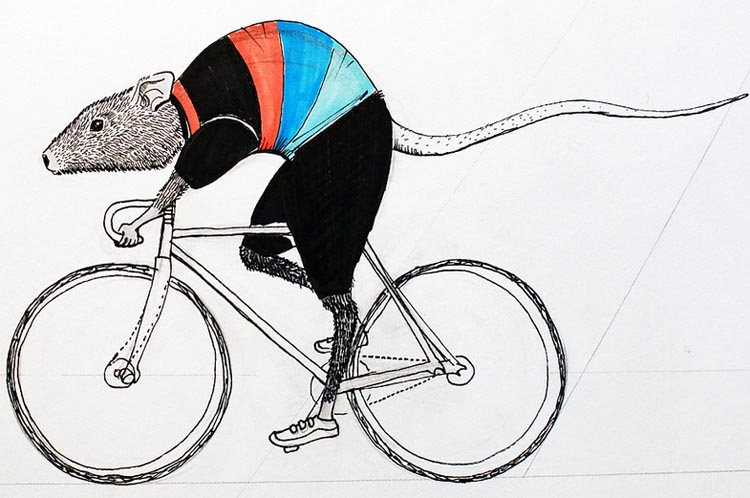 Research shows that cycling makes your brain grow! Rats absolutely never ride bikes - which is why this is a drawing, not a photo!
