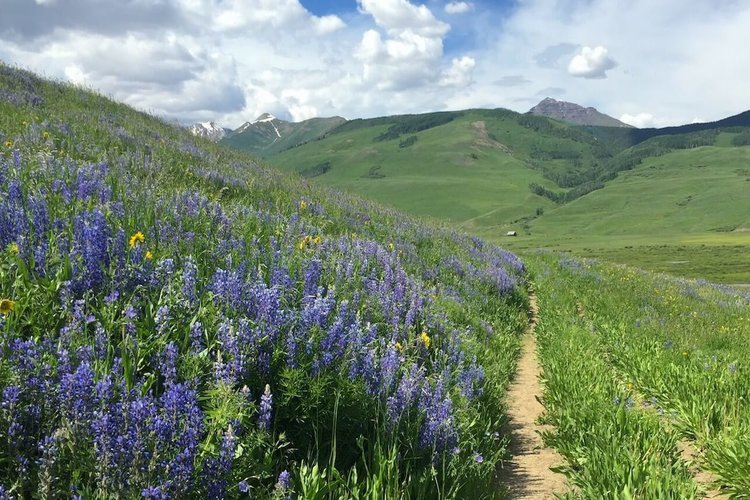 Bush Creek Trail, Crested Butte, Colorado. Photo by Travel Crested Butte