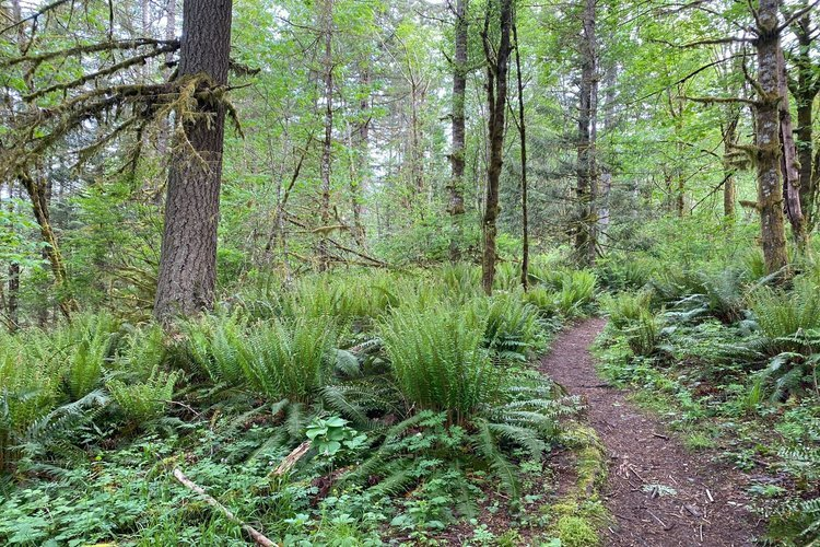 Paradise Valley, Paradise Valley Conservation area, Seattle (WA). Photo by Mark Hoppy, All Trails - Paradise Valley Conservation Area