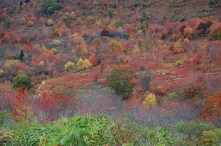 Spectacular Reds Along the Blue Ridge Parkway