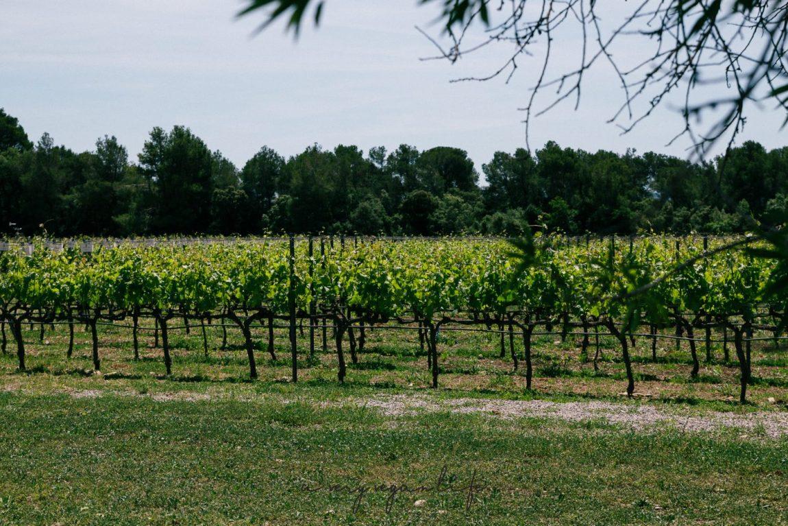 Weinanbau in Katalonien, Spanien