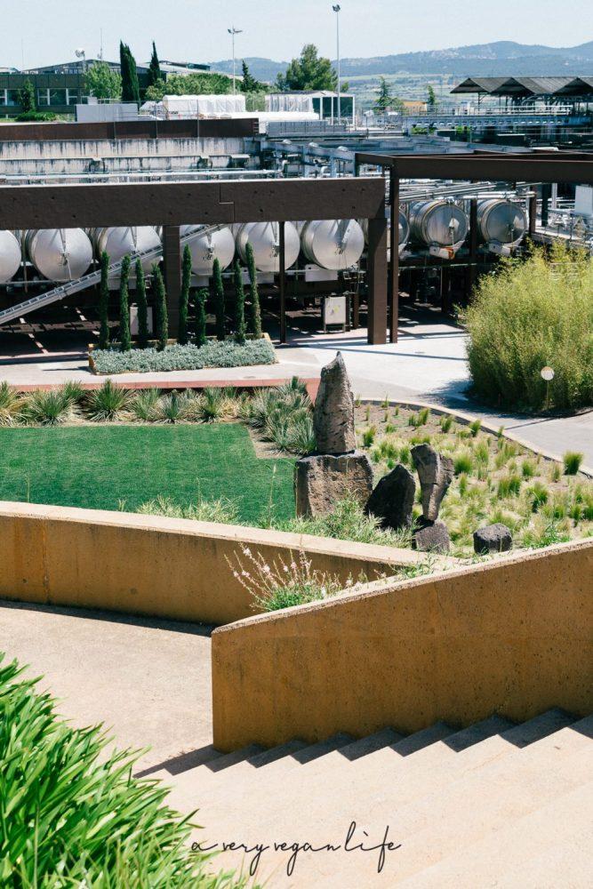 Weinproduktion bei Torres