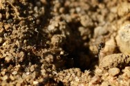 Ants at the Beach by Ave Valencia