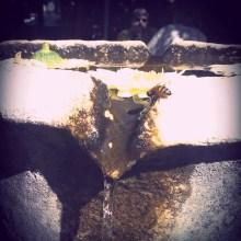 bee drinks water