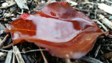 red-leaf-ojai-2-avevalencia.jpg