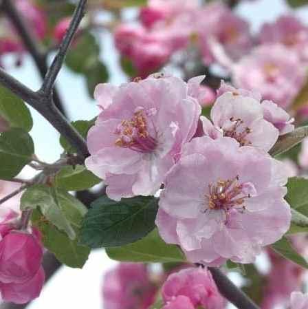обработка деревьев весной