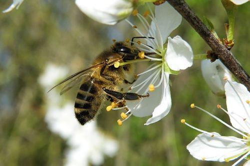 Опрыскивание деревьев весной по фазам от болезней и вредителей