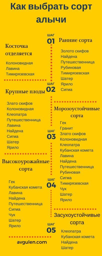 сорта алычи инфографика